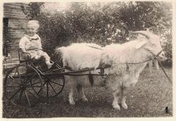 Family History Photo of the Week Winner (28 October 2016): Giddy-Up Goat