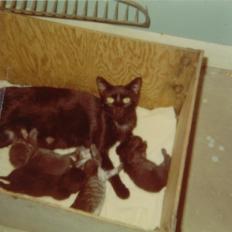 Barnett_Family_Pets-18.jpg