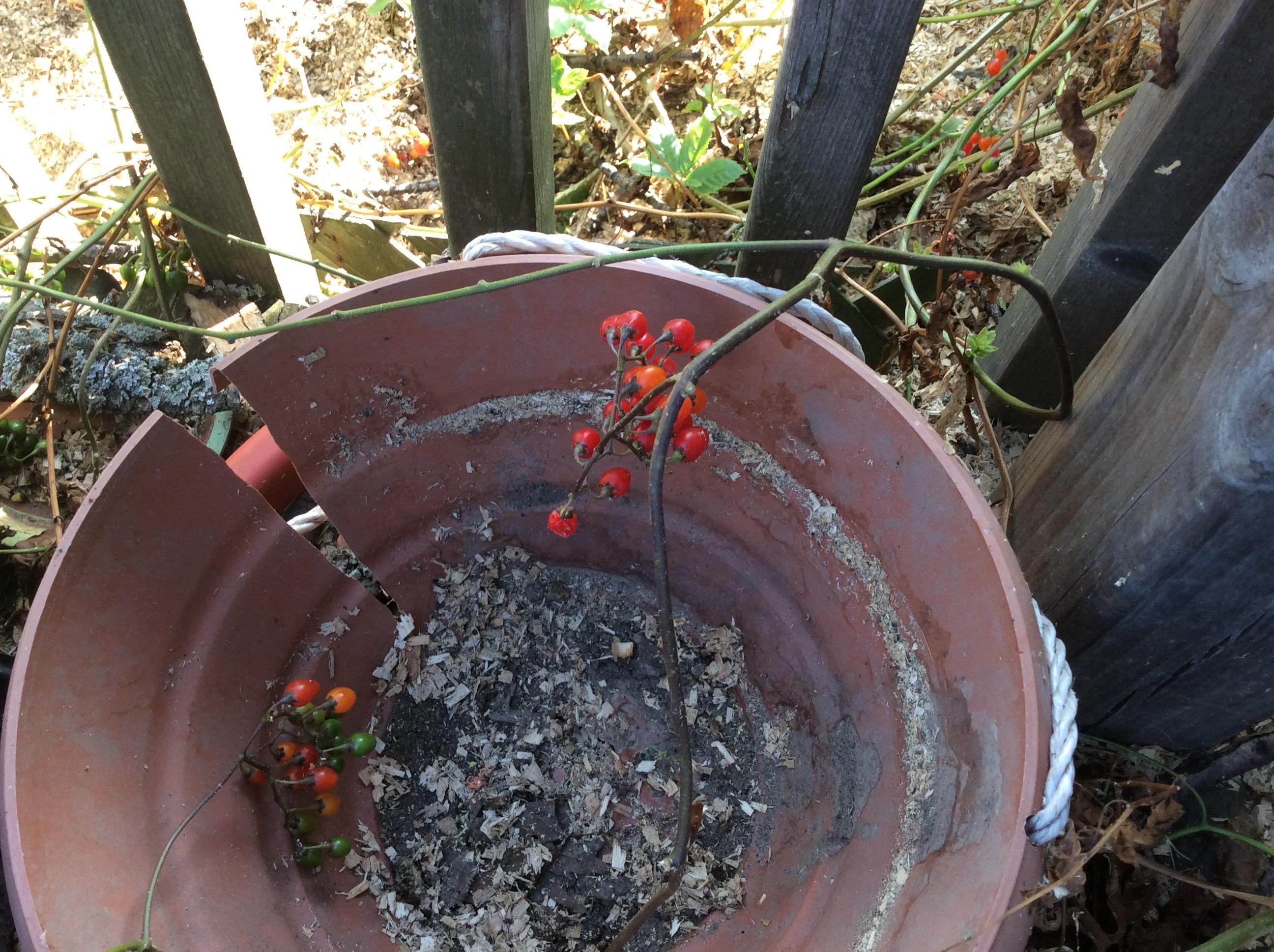 Triffid berries
