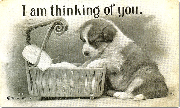 Thinking of You' Puppy Postcard