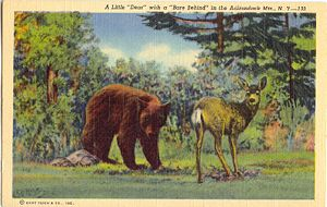 Deer with Bear Behind