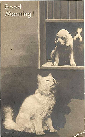 Good Morning! Cat and Dog Postcard