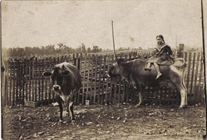 Altha Cox on cow 1909