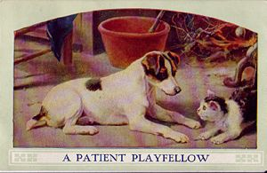 'A Patient Playfellow' Postcard