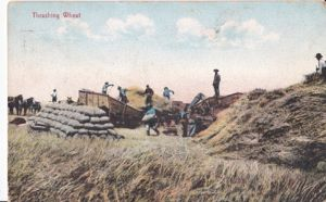 Threshing Wheat