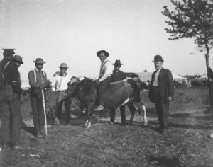 John Cloud Riding a Cow. L. to R: 2 un-ID'ed; Albert Thunder, Geo. Monegar, Andrew Bigsoldier, and un-ID'ed white man