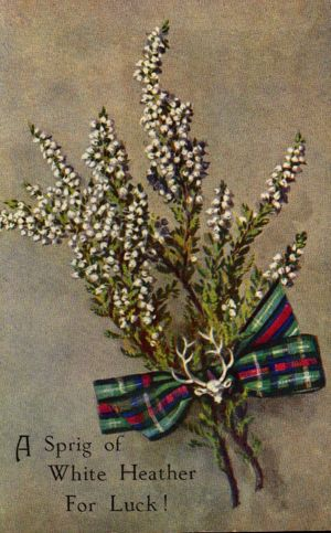 A Sprig of White Heather for Luck