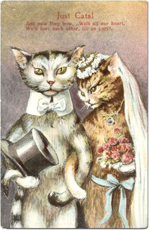 Cat Wedding Postcard