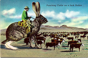 Punching Cattle on a Jack Rabbit
