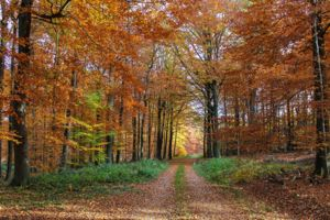 Autumn Forest by Katzenfee50