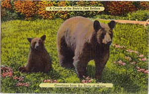 First Settlers: Bear and Cub