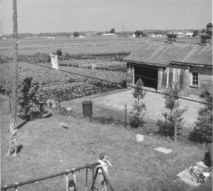 Holland Marsh Dutch Settlers